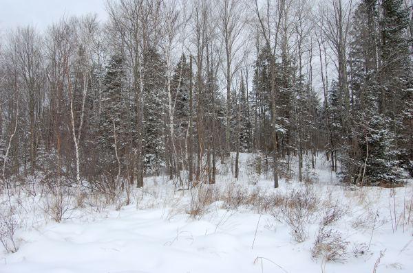 8-woods